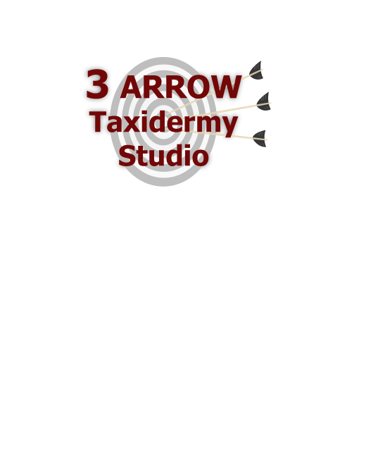 Three Arrow Taxidermy